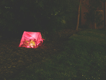 small plant tent at night